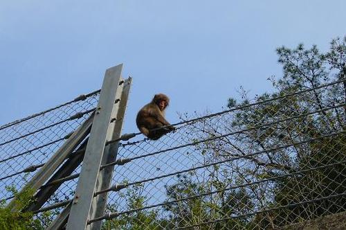野生の猿現る